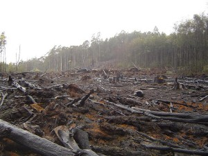 Deforestation-in-Australia